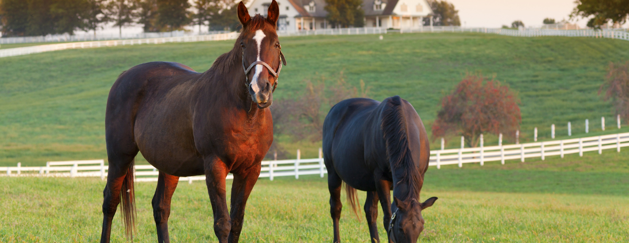 Two Horses in a green Pasture